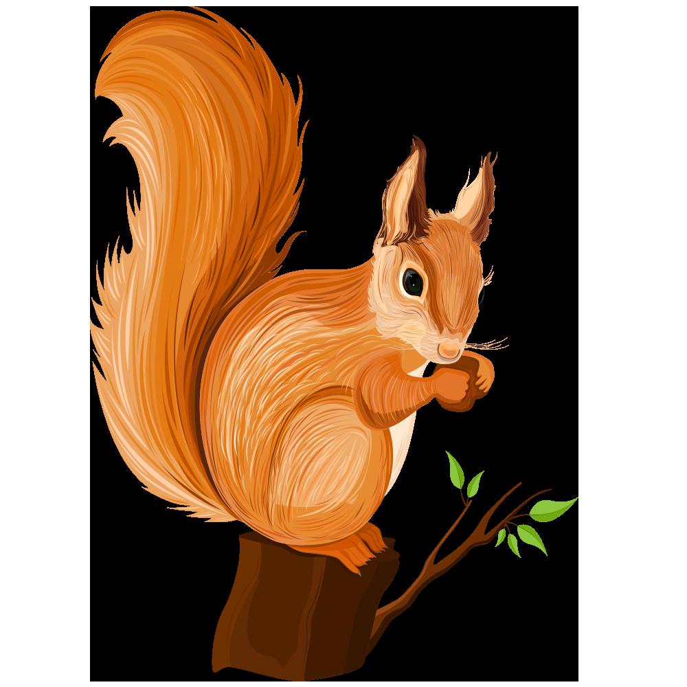 Squirrel fox squirrel