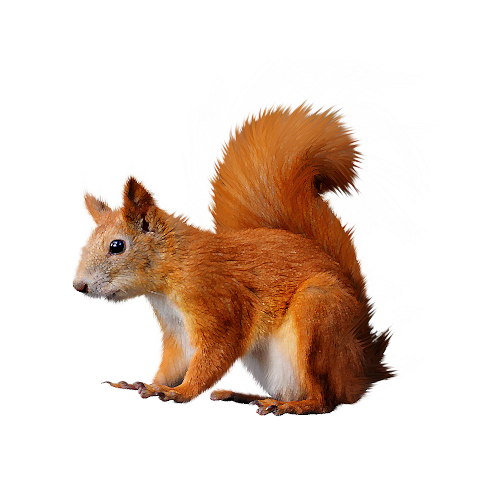 Winter clipart squirrel. Png nutcrackers pinterest and