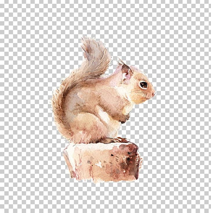 Chipmunk watercolor painting png. Clipart squirrel painted