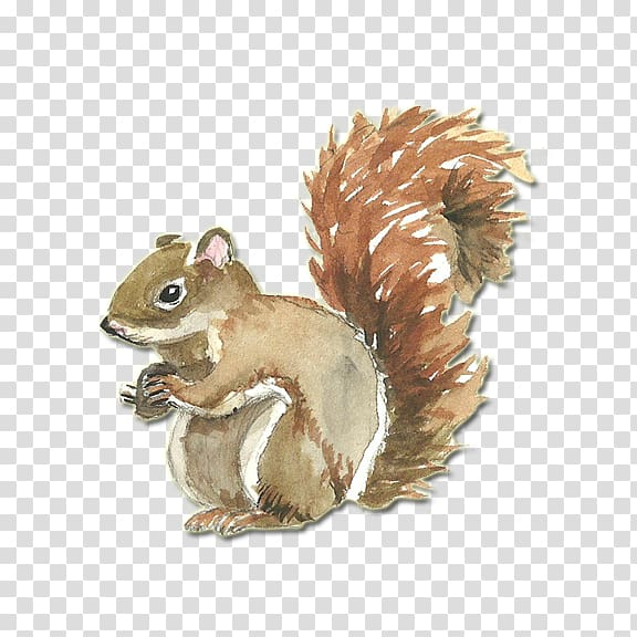 Clipart squirrel painted. Watercolor painting coreldraw