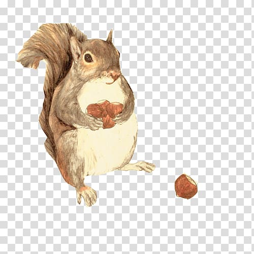 Clipart squirrel painted. Watercolor painting illustration
