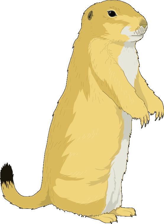 Present gift graphics illustrations. Groundhog clipart ground squirrel