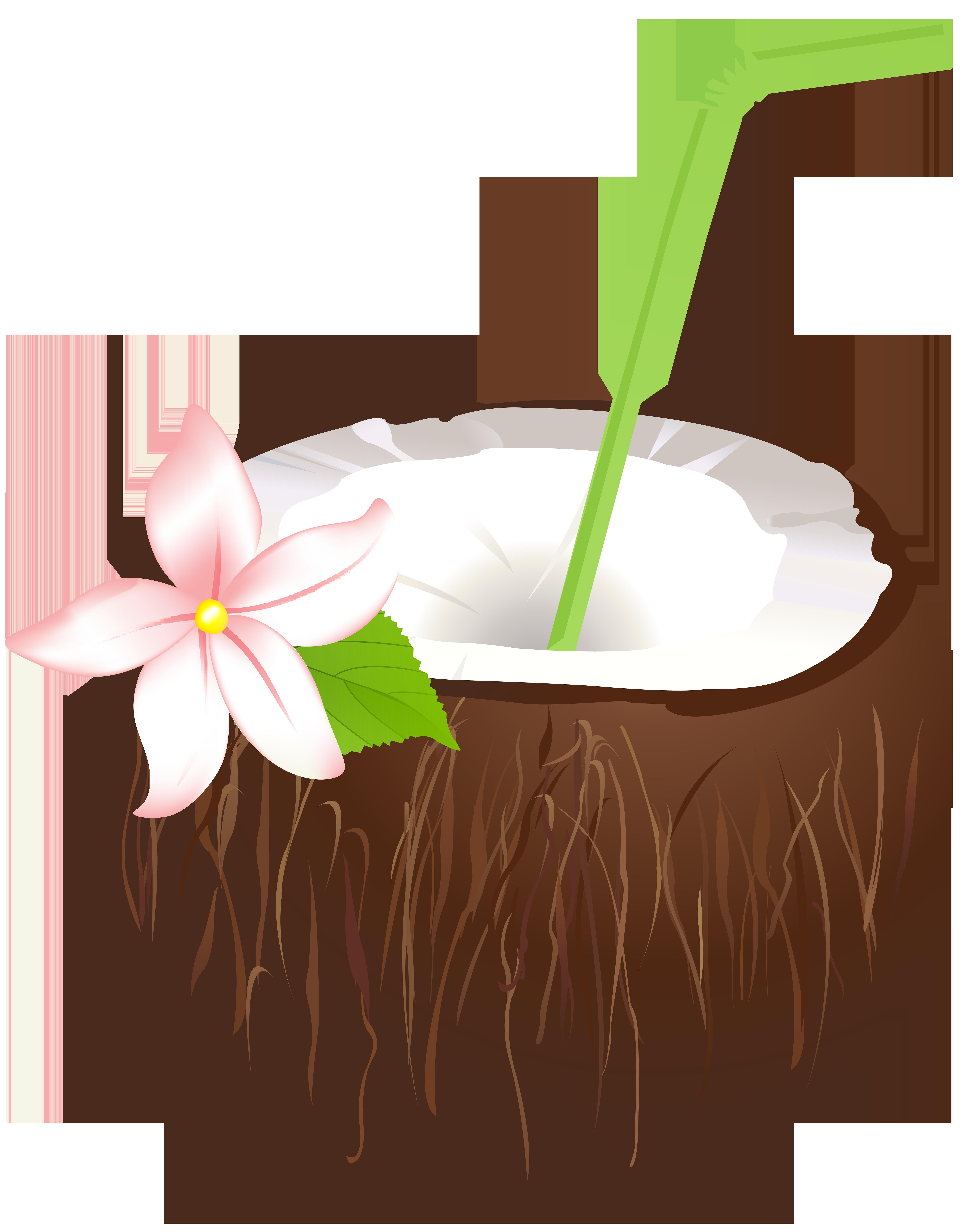 Summer png clip art. Drink clipart coconut