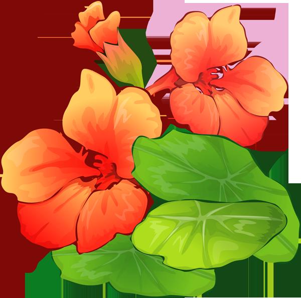 Clipart summer floral. Pontiac s rebellion an