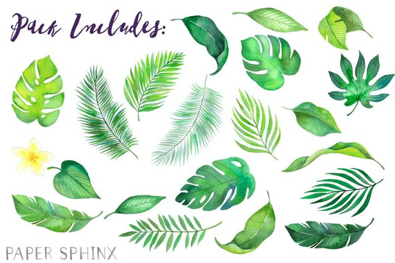 Palm clipart watercolor. Tropical leaves
