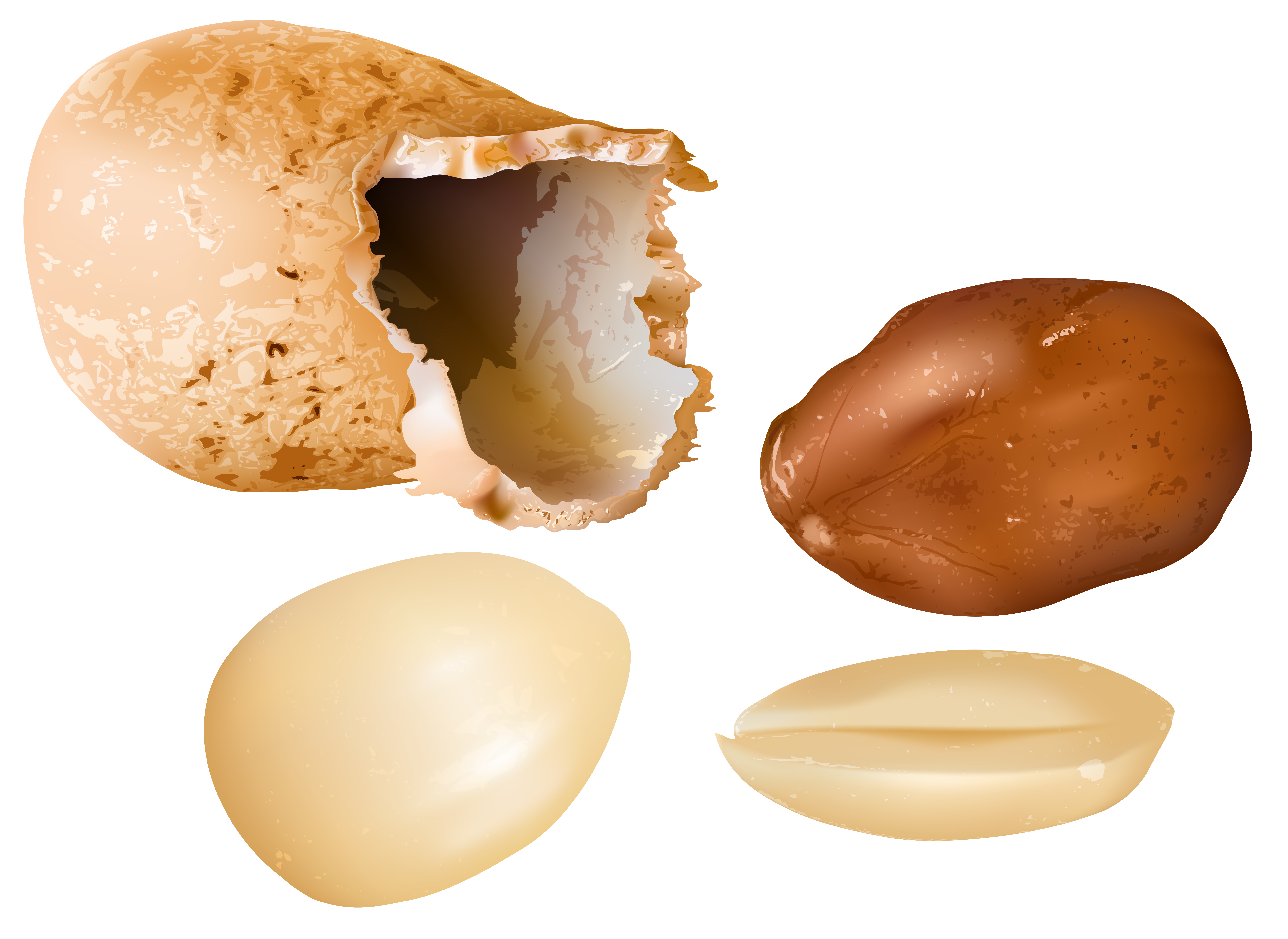 Png image gallery yopriceville. Peanuts clipart food