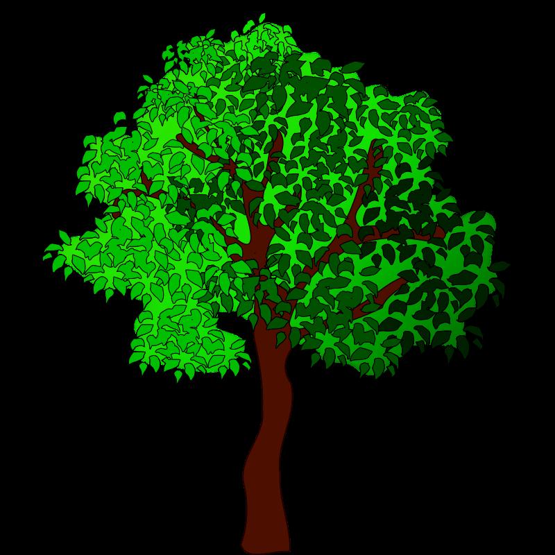 Four seasons trees clip. Tree clipart summer season