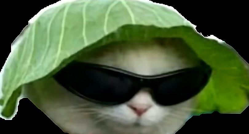 Sunglasses clipart dank. Cat meme cute funny