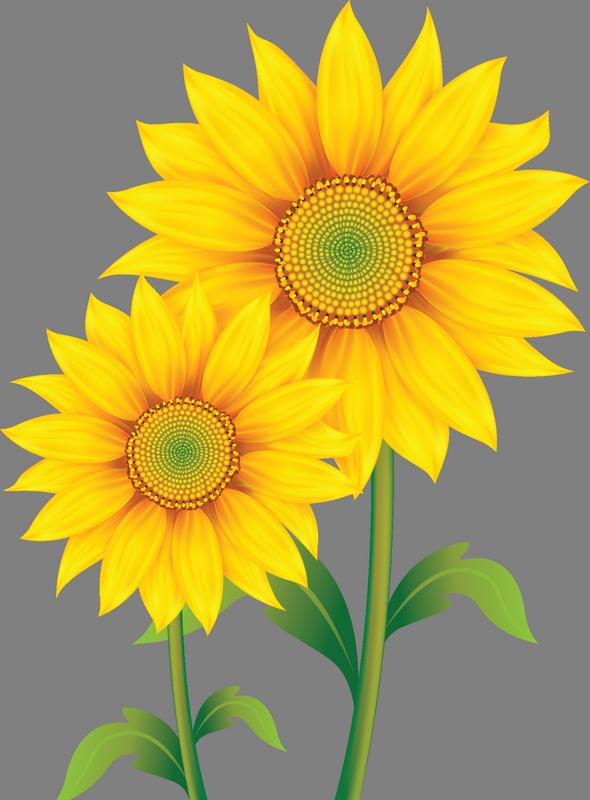 Tree clipart sunflower. Image du blog zezete