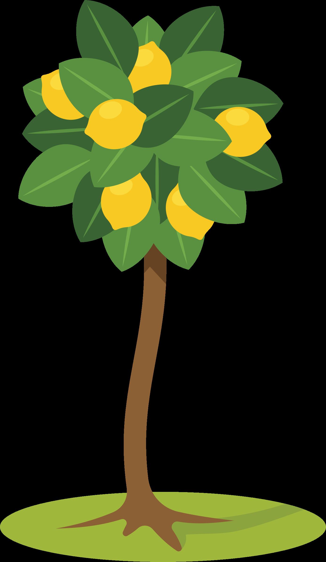 Lemon Tree Clipart Free Download Clip Art