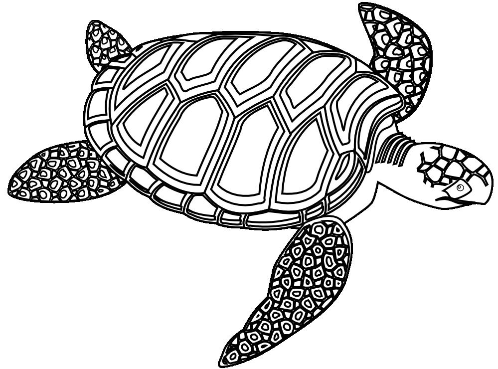 Desert clipart tortoise. Sea turtle black and