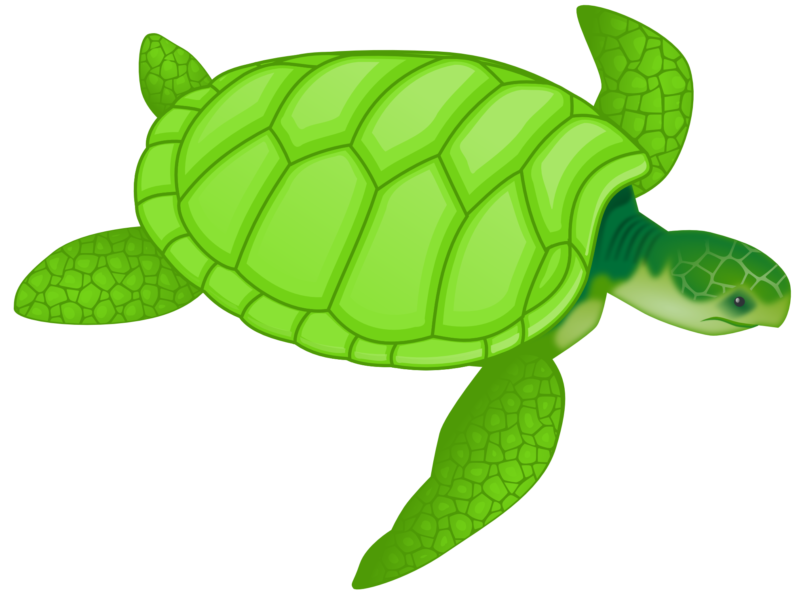 Free download images sea. Friend clipart turtle