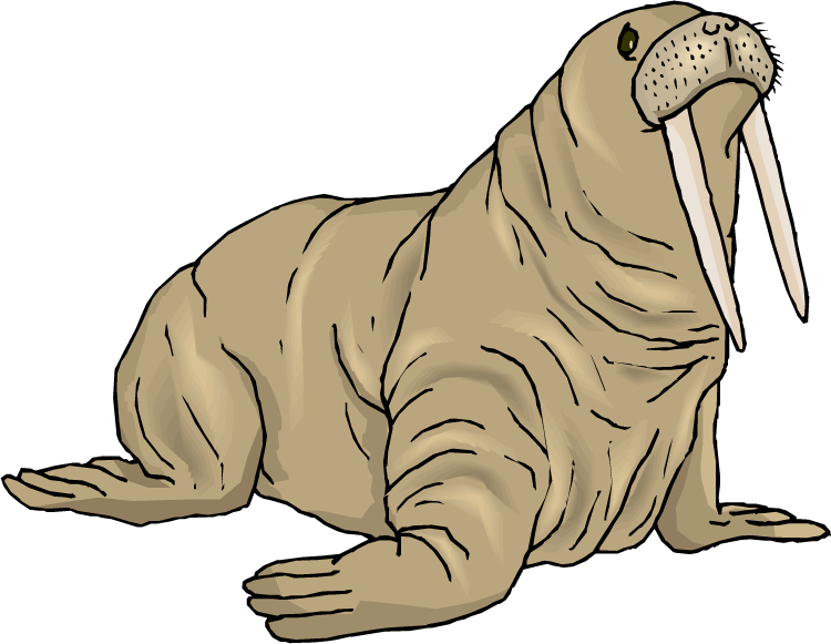 Walrus panda free images. Seal clipart weddell seal