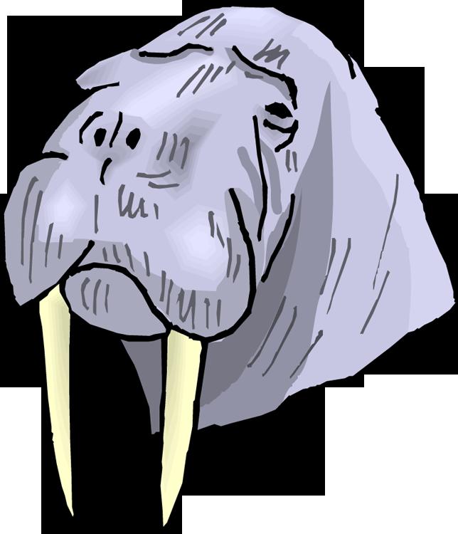 Panda free images walrusclipart. Head clipart walrus