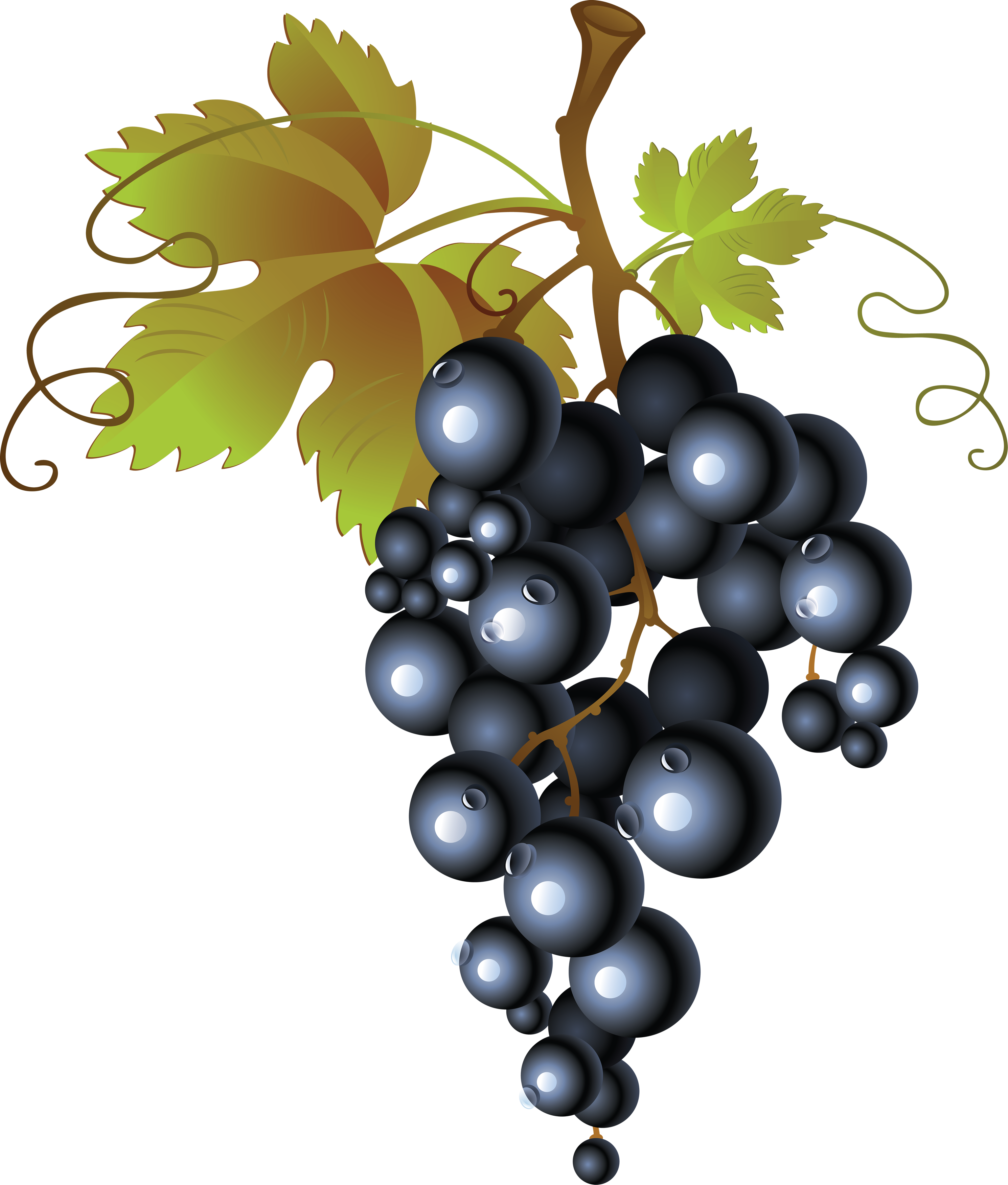 Black png image purepng. Grapes clipart happy