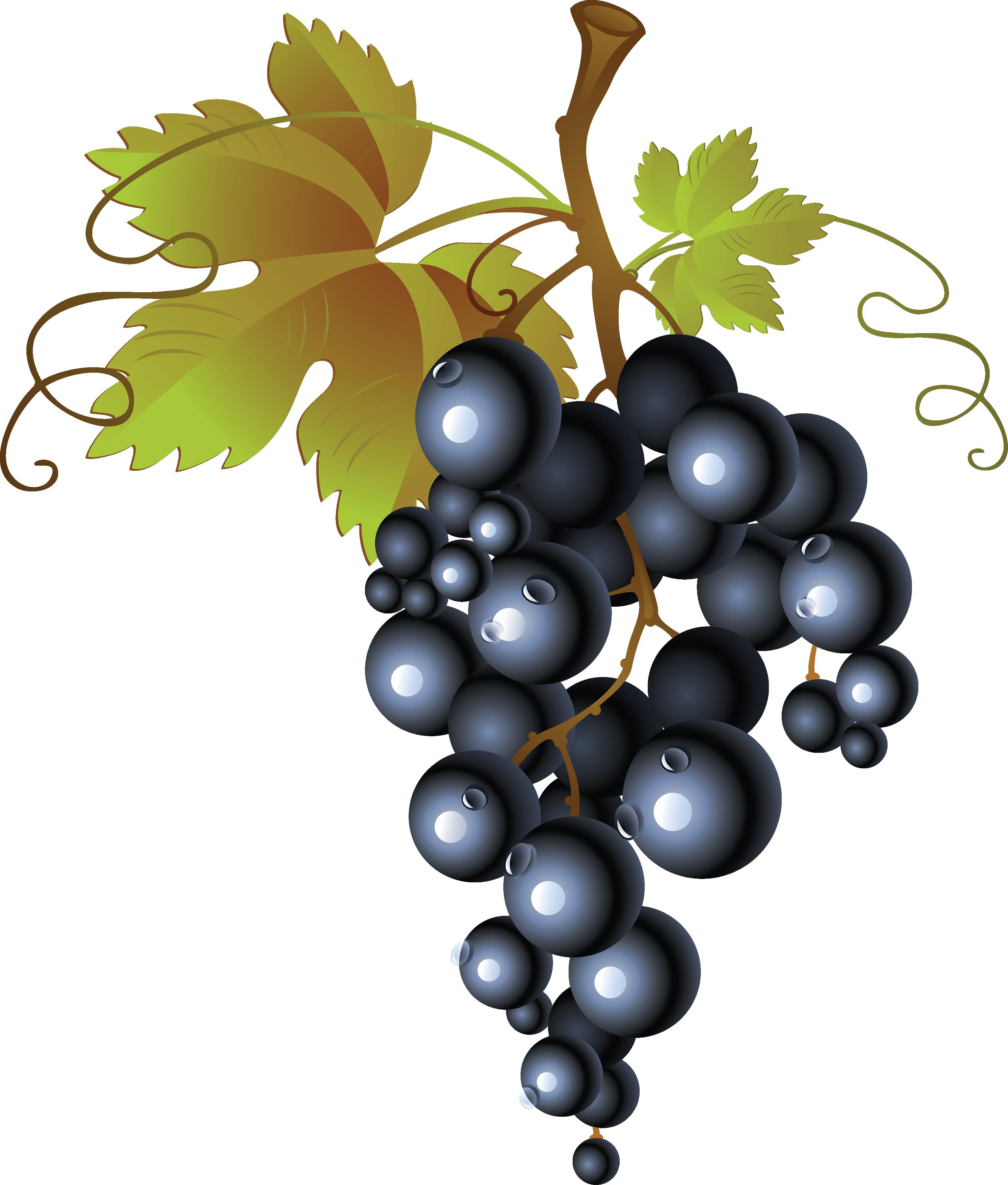 Grape clipart grap. Black grapes png image