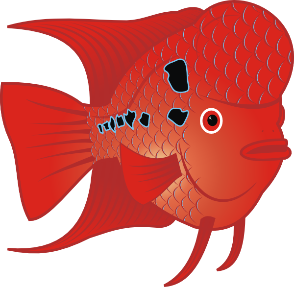 Flowerhorn clip art at. Name clipart fish
