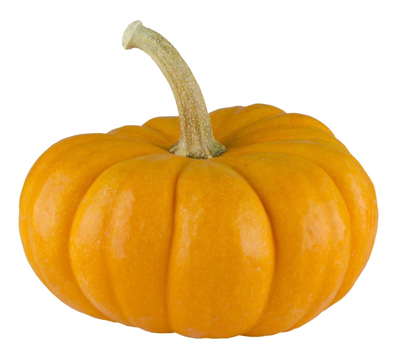Pumpkin png images transparent. Clipart thanksgiving translucent