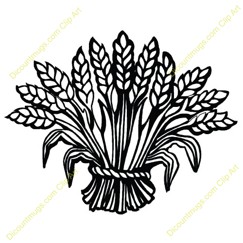 Wheat clipart thanksgiving. Pin on