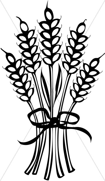 Tied with ribbon . Wheat clipart thanksgiving