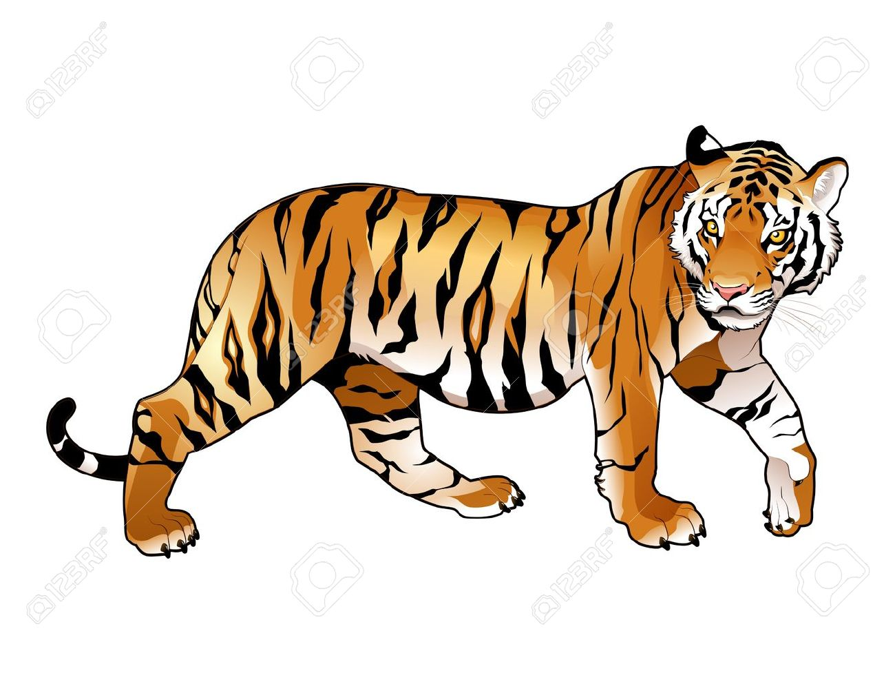 Clipart tiger. Lily at getdrawings com