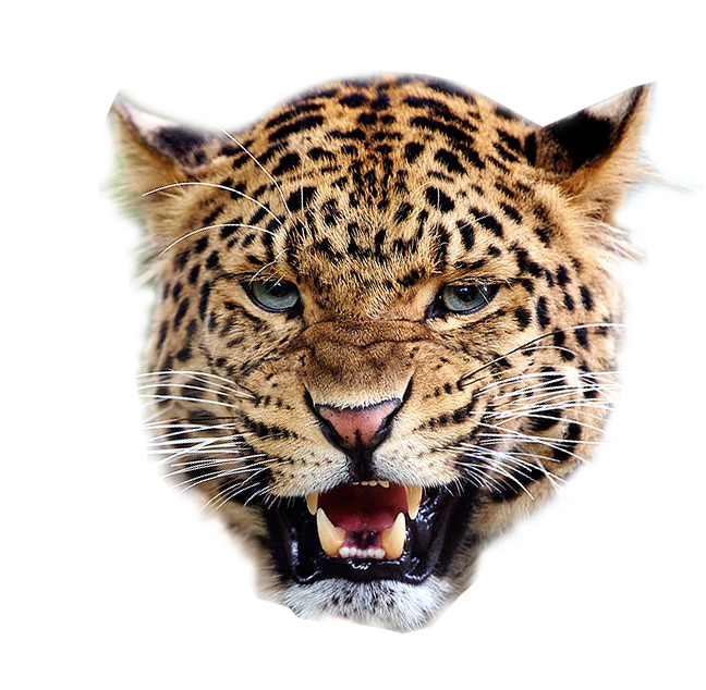 Images of png spacehero. Clipart tiger angry