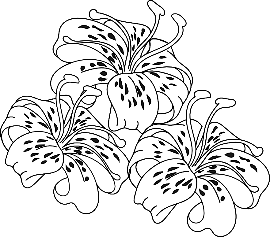 Hibiscus clipart colouring. Day lily clip art