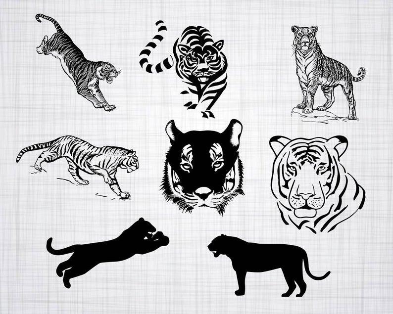 Svg bundle cut files. Clipart tiger file