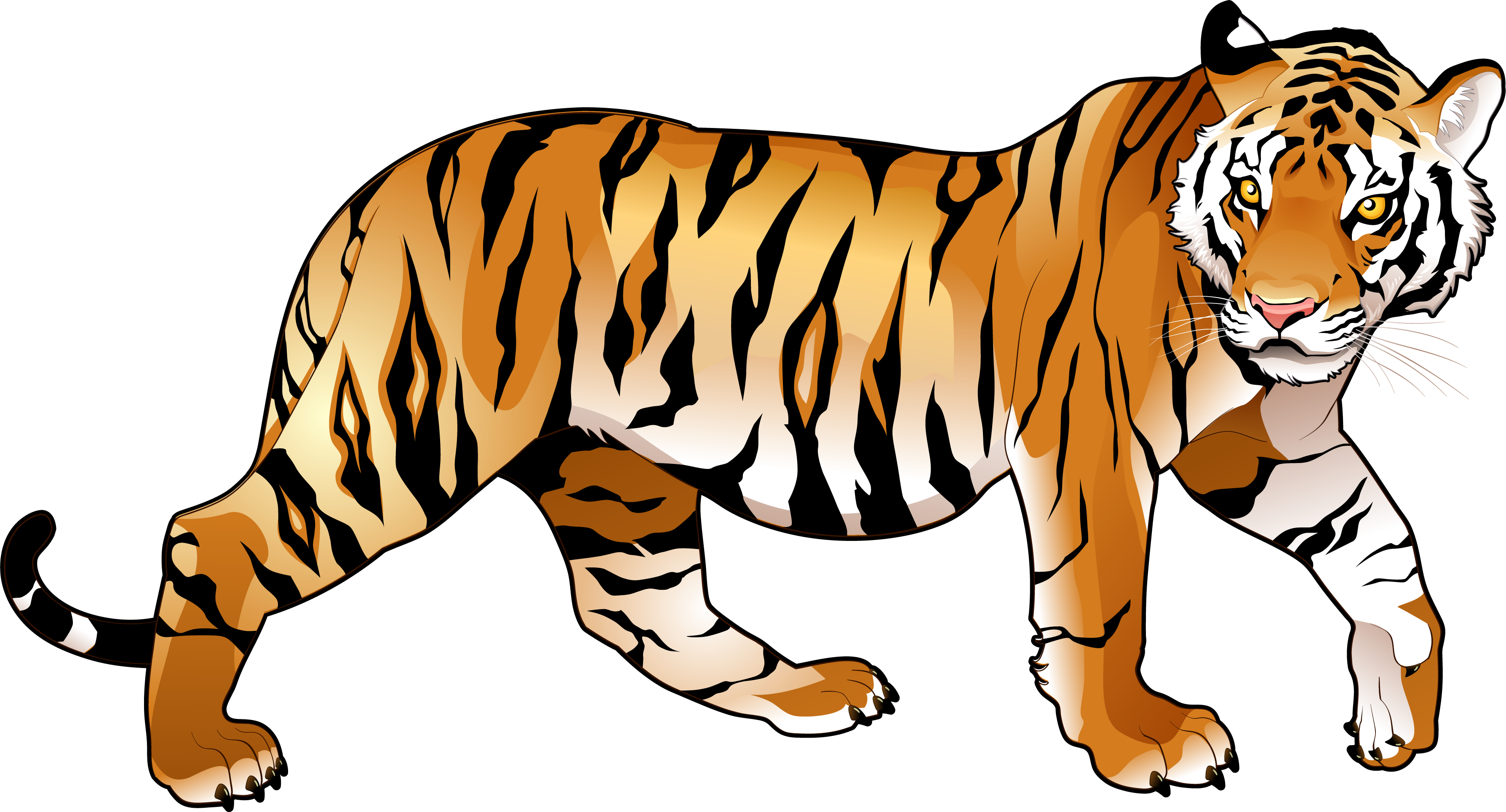 Free images gallery for. Clipart tiger real