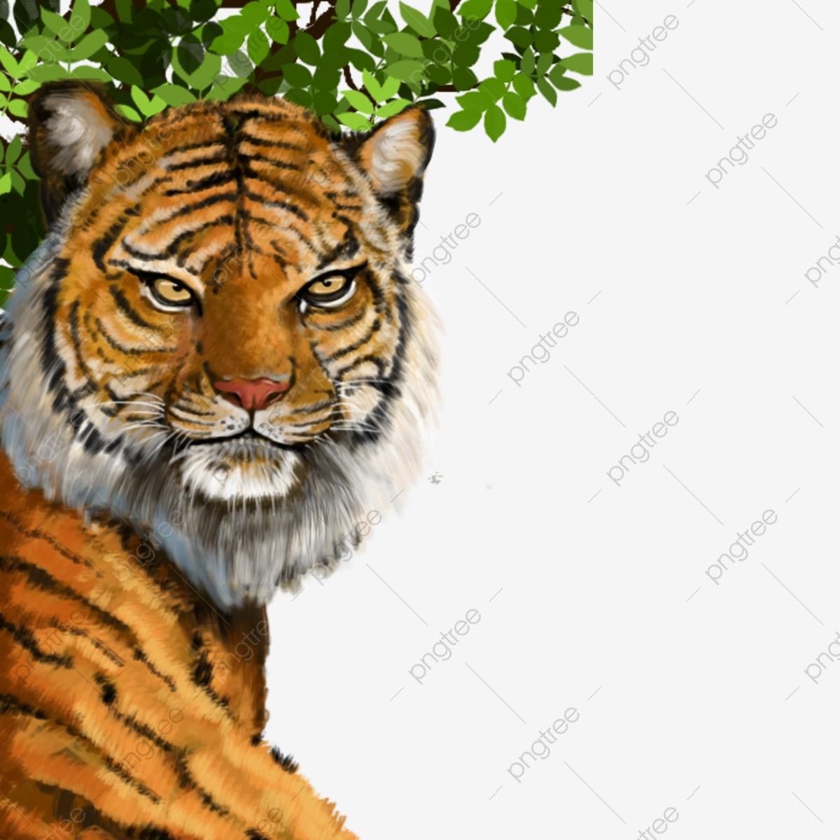 Clipart tiger south china tiger. Hand painted drawn