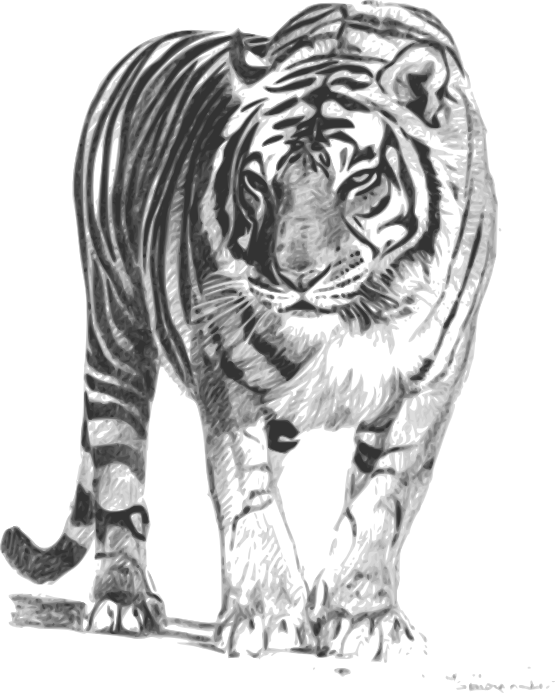 Clipart tiger south china tiger. Clipartist net bengal pxpng