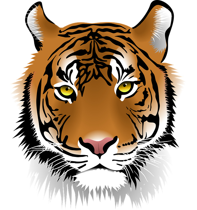 Clipart tiger south china tiger. Png reliure pinterest tigers