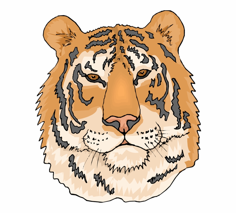 Coloring pages of tigers. Clipart tiger tigre