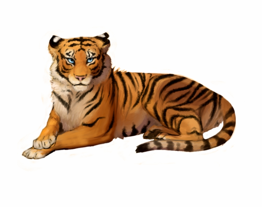 Png photo drawing . Clipart tiger transparent background