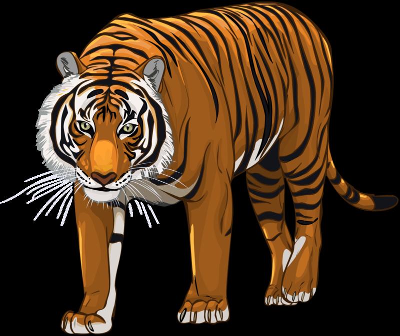 Download png images backgrounds. Clipart tiger transparent background