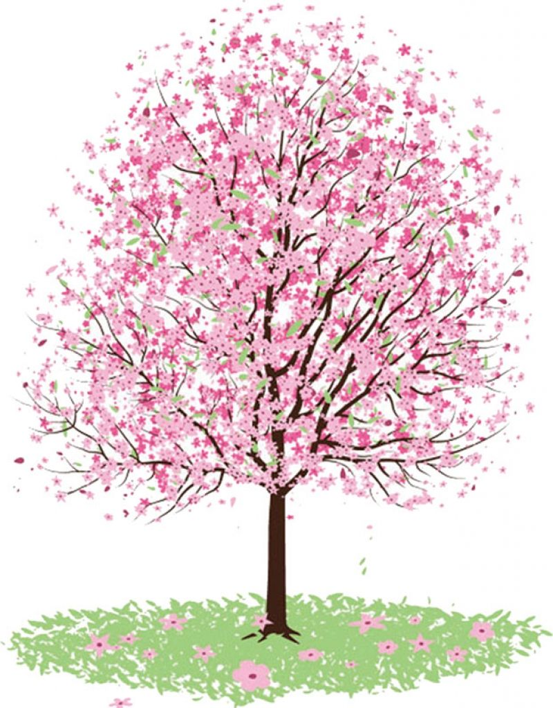 Blossoms trees cherry . Clipart tree apple blossom