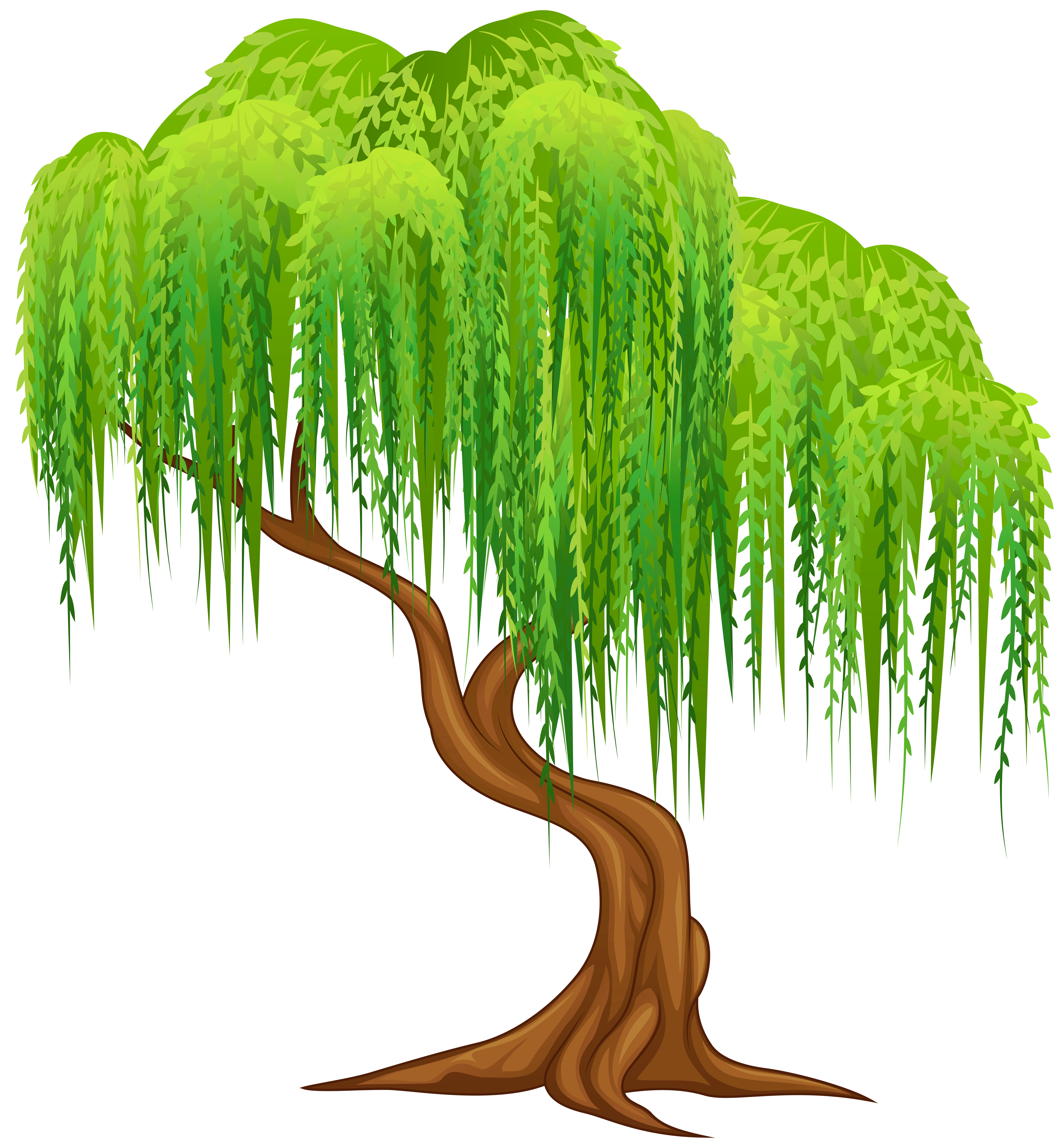 Clipart tree birthday. Willow transparent png clip