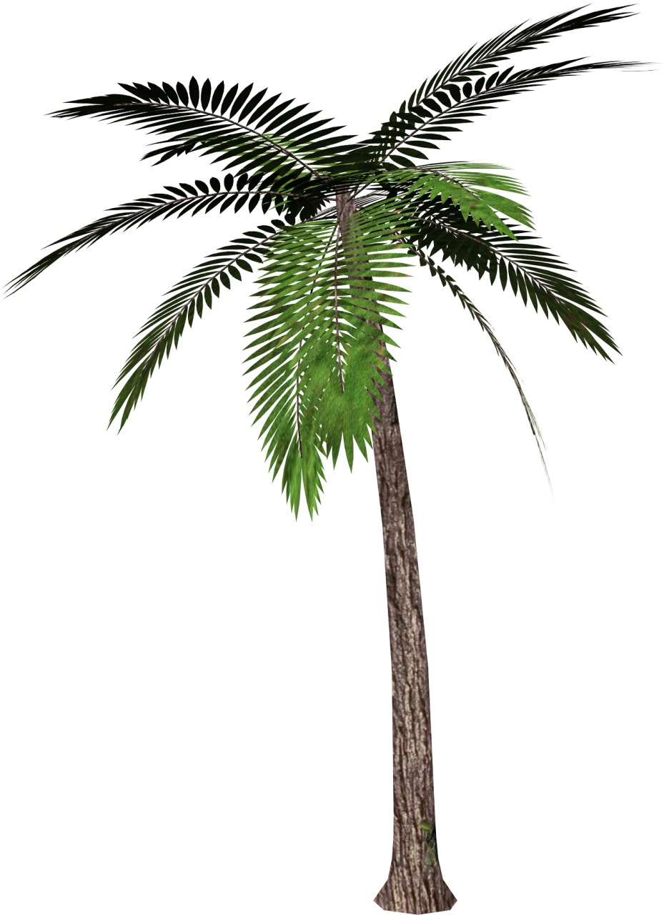 Tree clipart buko. Palm no background panda