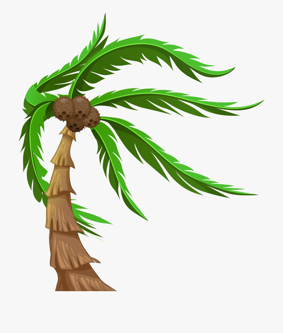 With coconuts transparent png. Palm clipart buko