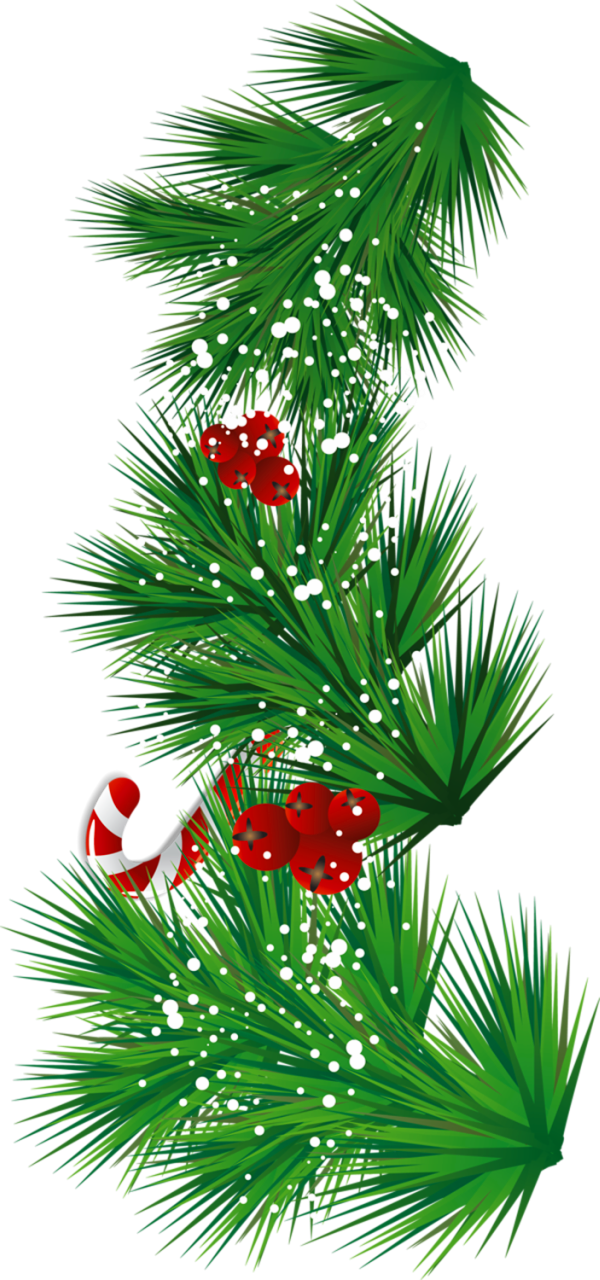 Tree clipart candy. Transparent pine branch with