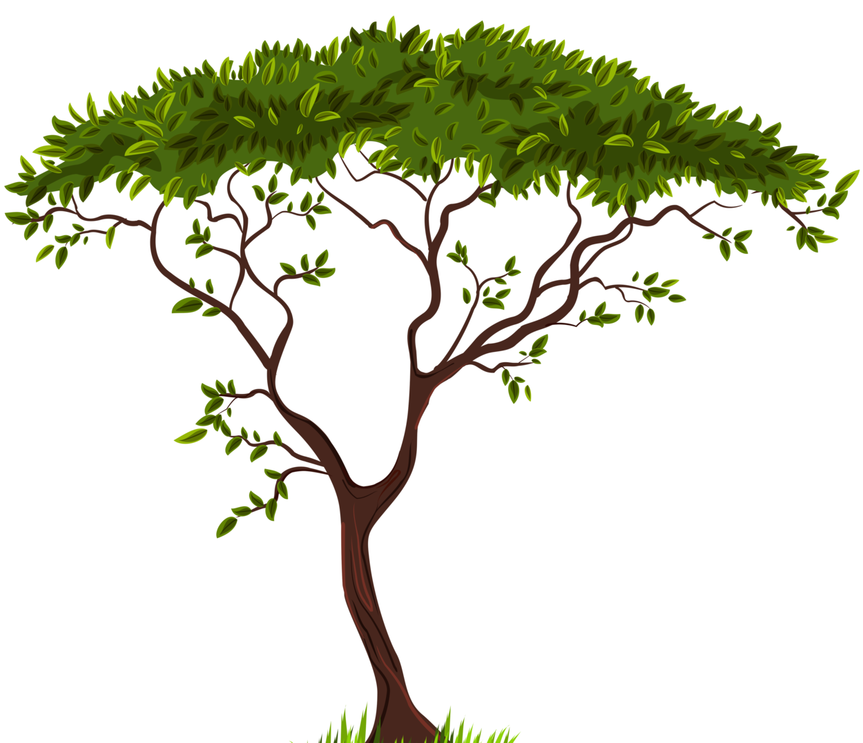 Plant clipart transparent background. Exotic tree png clip