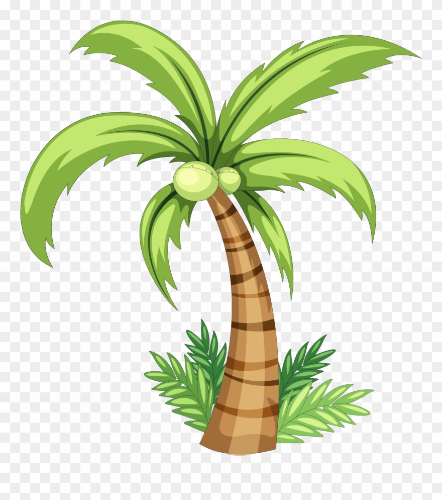 Drawing clip art tree. Coconut clipart simple