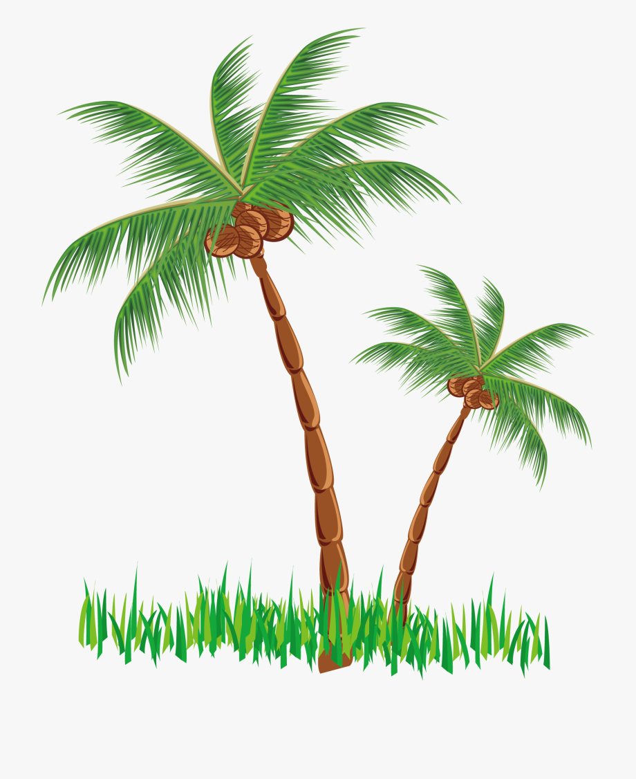 Tree clipart coconut. Png free cliparts on