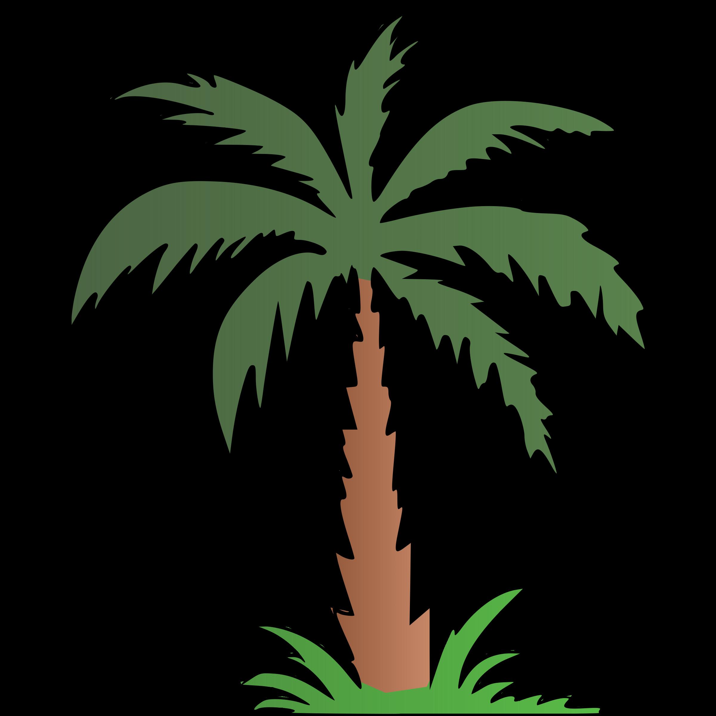 Tree clipart colour. Palm big image png