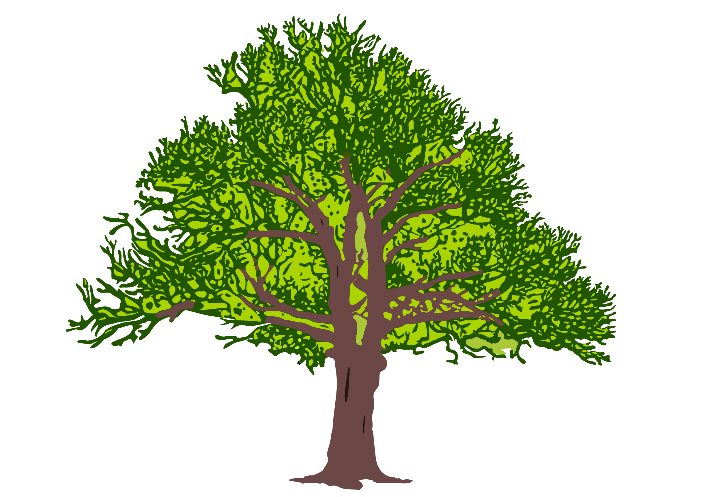 Clipart tree colour. Coloured big image png