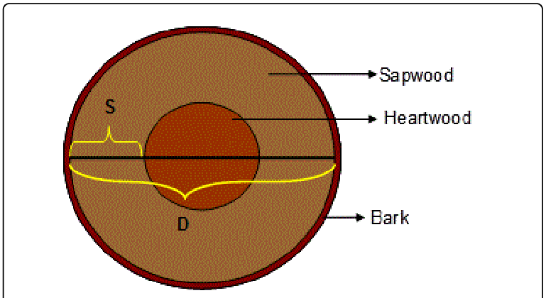 Of a typical trunk. Clipart tree cross section
