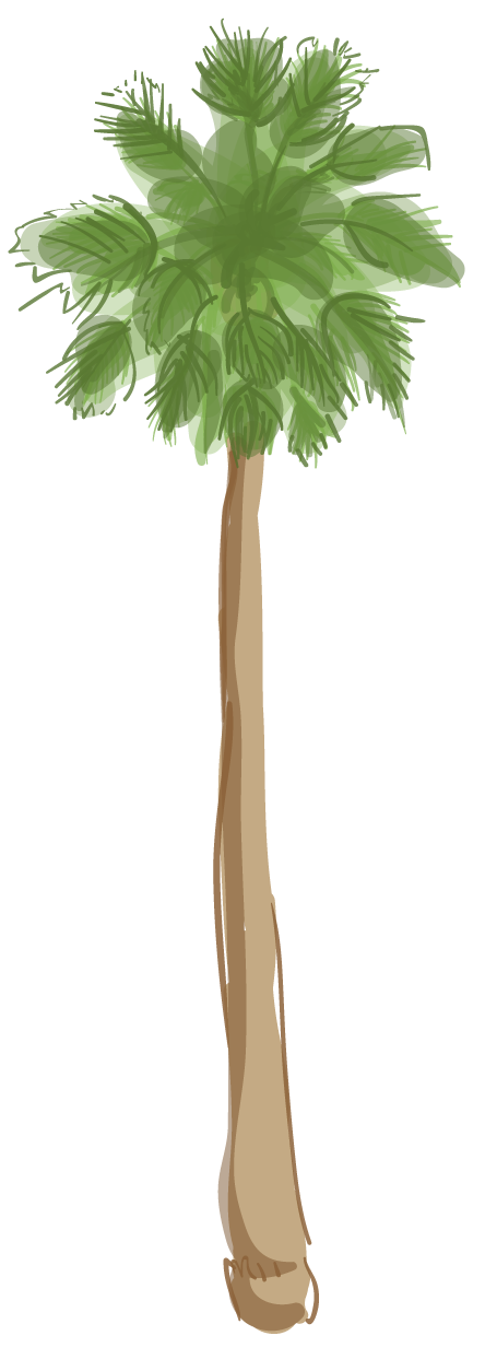 L a s palm. Clipart tree cross section