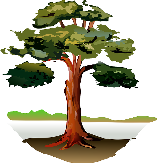 What s the difference. Clipart tree cross section