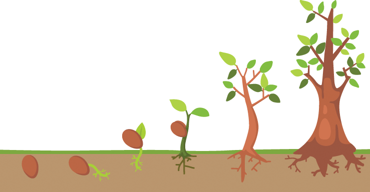 Tree clipart life. Cycle pbs learningmedia