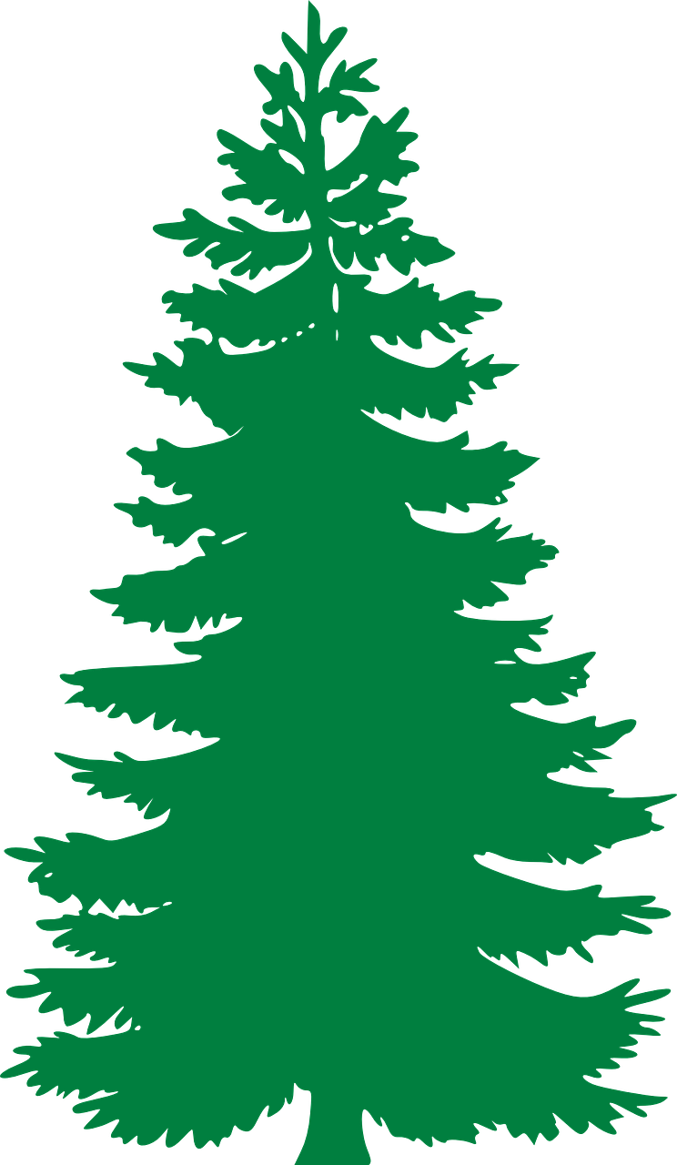 Free image on pixabay. Tree clipart evergreen
